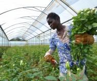 farmer 2.jpg